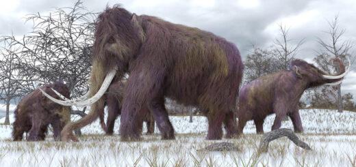 naukowcy-przywroca-do-zycia-gatunek,-ktory-wymarl-tysiace-lat-temu?!